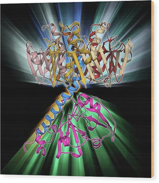 Cholera Toxin Molecule Wood Print by Laguna Design