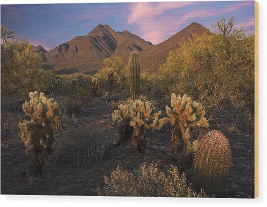 Cholla Cactus At Mcdowell Mountains Wood Print