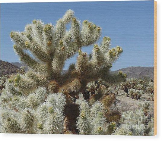 Cholla Cactus Wood Print by Deborah Smolinske