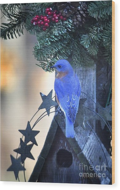 Christmas Bluebird Wood Print