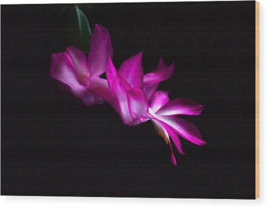 Christmas Cactus Blossom Wood Print