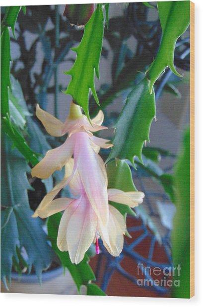 Christmas Cactus Flower Plant Wood Print