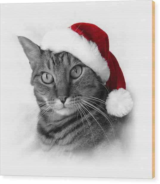 Christmas Cat 1 Wood Print
