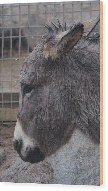 Christmas Donkey Wood Print