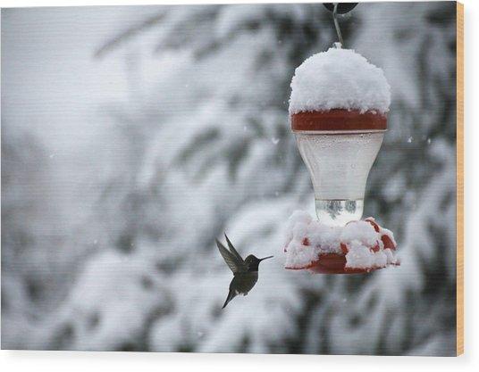 Christmas Hummingbird Wood Print