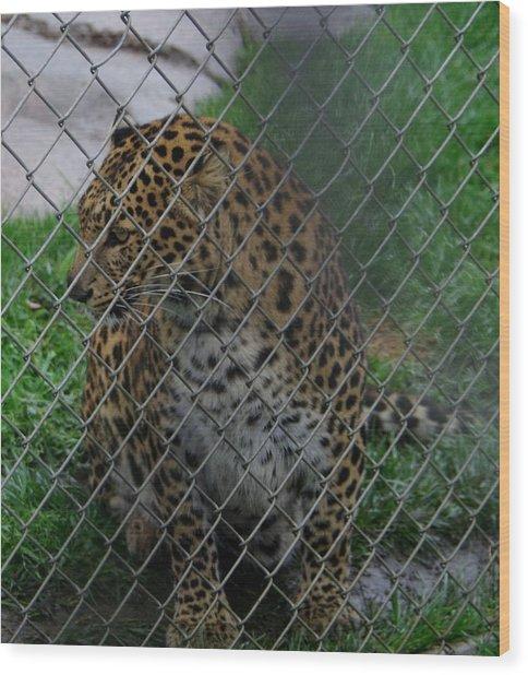 Christmas Leopard I Wood Print