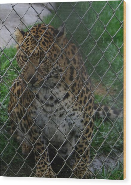 Christmas Leopard II Wood Print