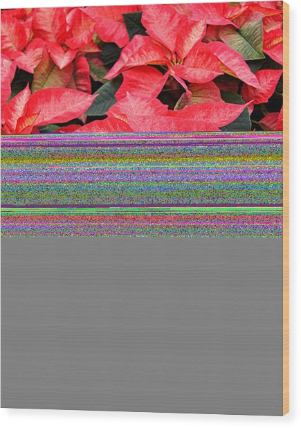 Christmas Poinsettia's Wood Print by Carol Toepke