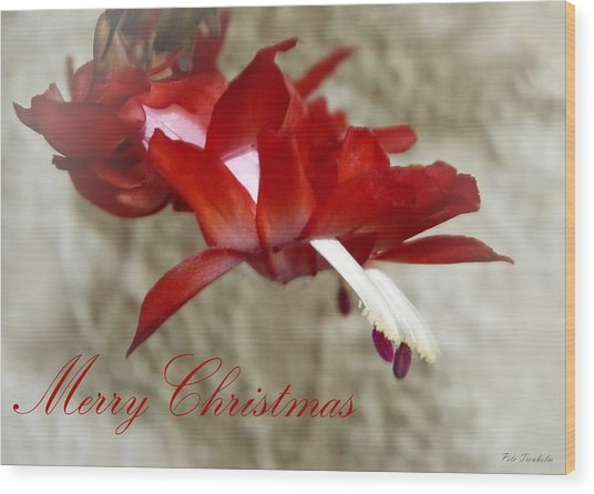 Christmas Red Beauty Card Wood Print