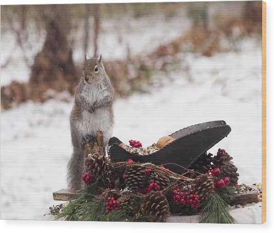 Christmas Squirrel Wood Print