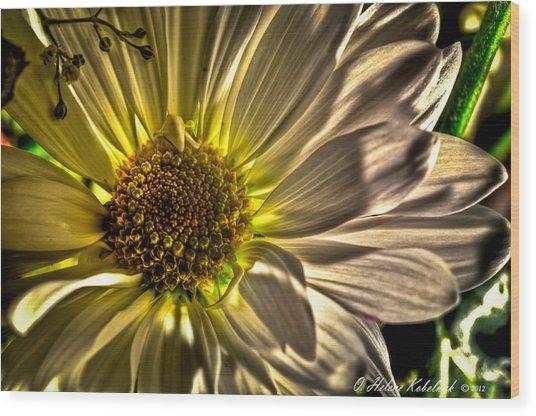 Chrysanthemum Wood Print by Helene Kobelnyk