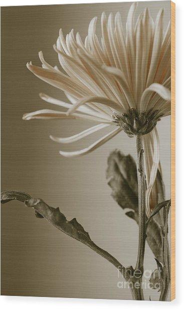 Chrysanthemum Petals 2  Wood Print