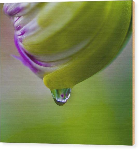 Raindrop Bud Wood Print