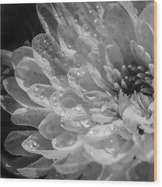 Chrysanthemum Squared Wood Print