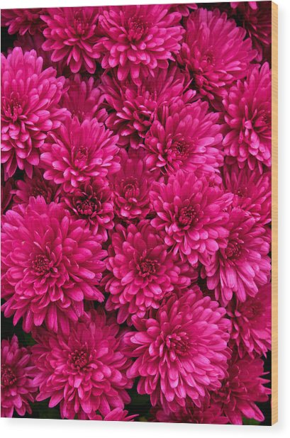 Chrysantheumums Wood Print