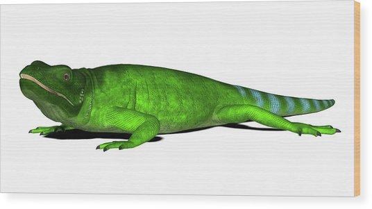 Chuckwalla Lizard Wood Print by Friedrich Saurer