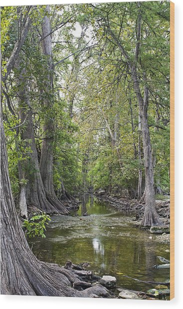 Cibolo Creek - 2 Wood Print