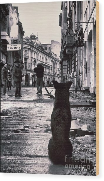 City Streets And The Theory Of Waiting Wood Print