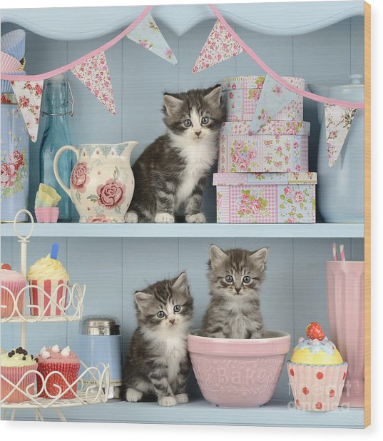 Baking Shelf Kittens Wood Print