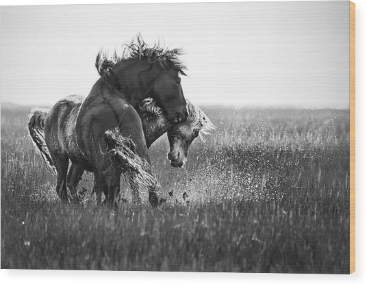 Clash Of Two Wild Stallions Wood Print