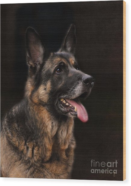 Classic German Shepherd Wood Print