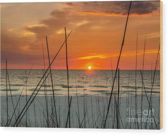 Clearwater Sunset 2 Wood Print