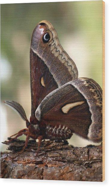 Clem The Moth Wood Print