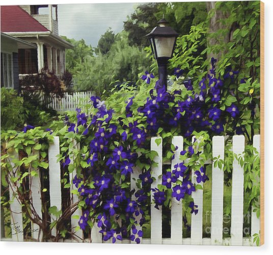 Clematis On White Picket Fence Painting Effect Wood Print
