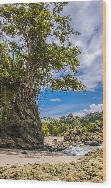 Cliff Diving Tree Wood Print