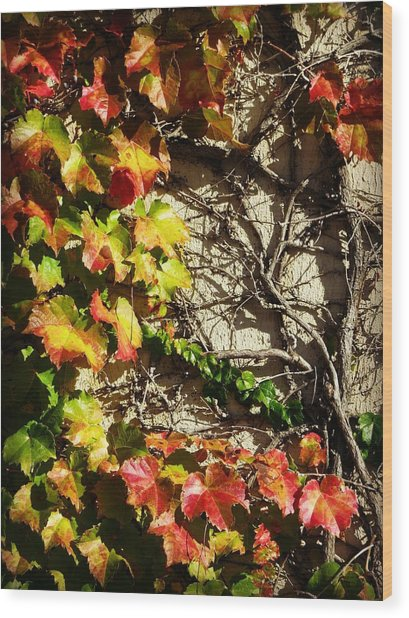 Climbing Color Wood Print by Mary Willrodt
