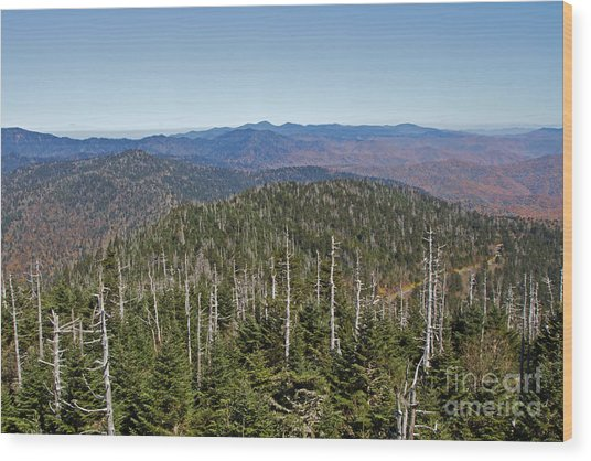 Clingmans Dome Autumn Wood Print