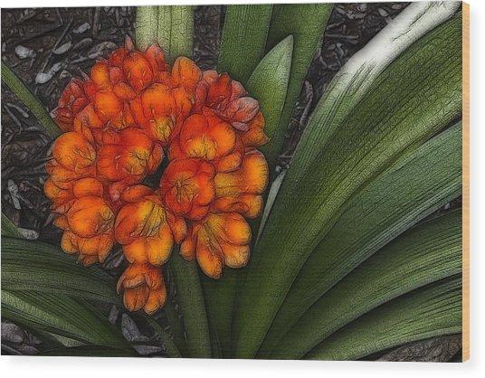Clivia Wood Print