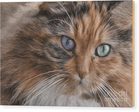 Cloe Kitty Wood Print