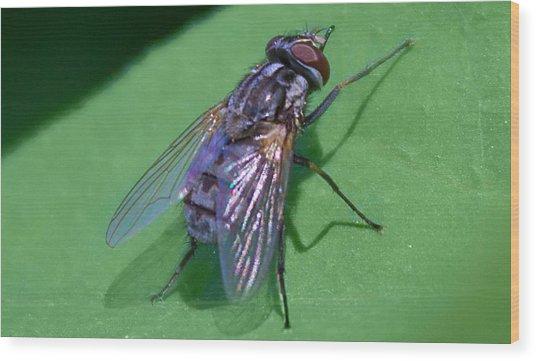 Close Up Fly Wood Print