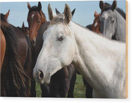 Close-up Herd Of Horses. Wood Print