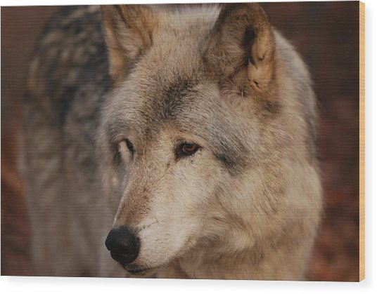 Close Up Wood Print
