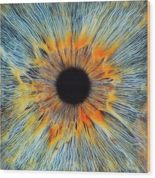 Close-up Of A Human Eye, Pupil And Iris Wood Print by Dimitri Otis
