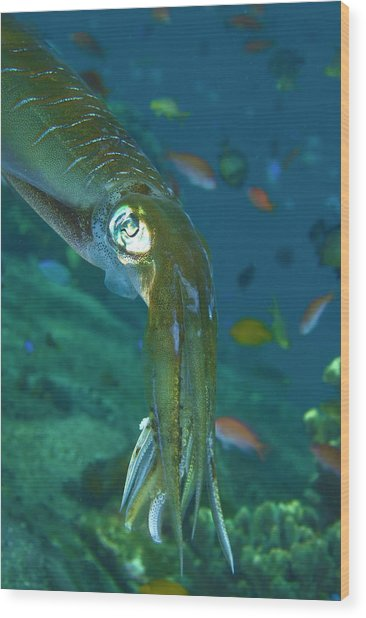 Close-up Of A Squid, Lembata Island Wood Print by Jaynes Gallery