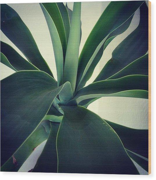 Close-up Of Agave Plant Wood Print by Antonio Trogu / Eyeem