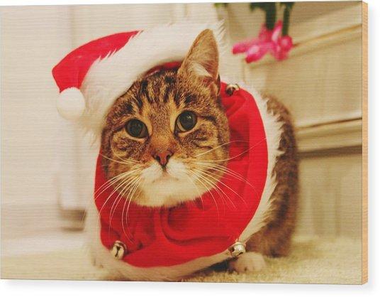 Close-up Of Christmas Cat Wood Print by Gregor Bleul / Eyeem