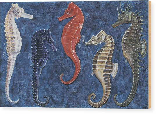 Close-up Of Five Seahorses Side By Side  Wood Print
