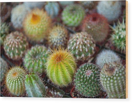 Close-up Of Multi-colored Cacti Wood Print