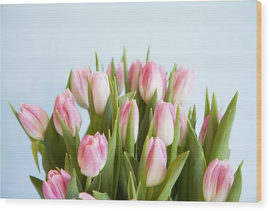 Close Up Of Pink Tulips Wood Print