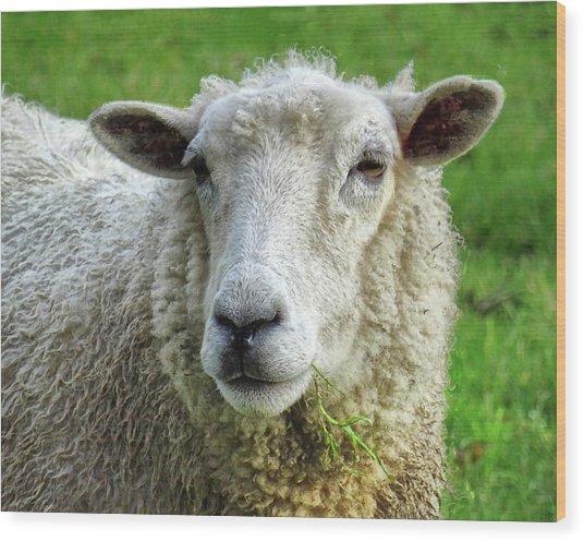 Close Up Of Sheep Wood Print by Patricia Hamilton
