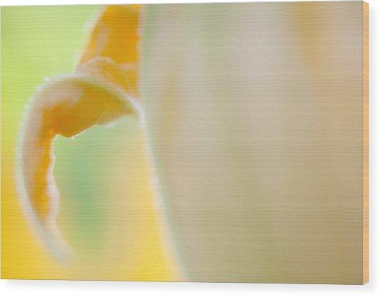 Close-up Of Yellow Plant Wood Print by Paulien Tabak / EyeEm
