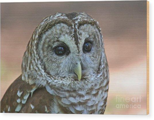 Closeup Of A Barred Owl  Wood Print
