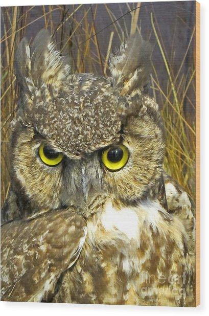 Closeup Of A Great Horned Owl Wood Print