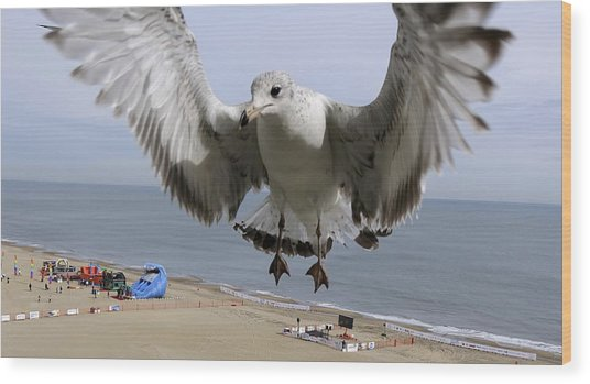 Closeup Of Hovering Seagull Wood Print