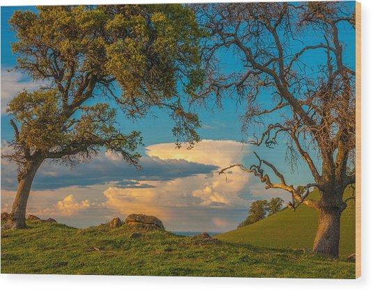 Clouds Between Trees Wood Print