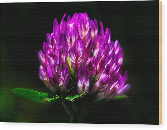 Clover Flower Wood Print